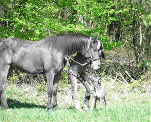 pony pferd boxer myboys frühling
