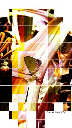 wapoffgrid myphoto butterfly