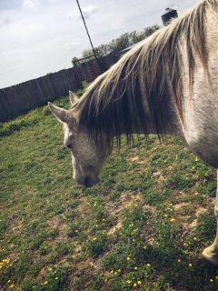 farm farmlife horses freetoedit