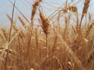 freetoedit sunnyday summer fields crops