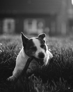 dog petsandanimals blackandwhite nature cute