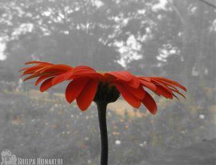 umbrella flower protection feeling momanddad
