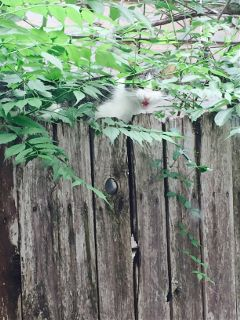 freetoedit kittycat