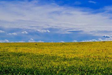 landscape minimalism field contrast bluesky