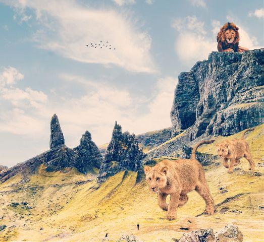 #freetoedit,#lions,#lionpack,#nature