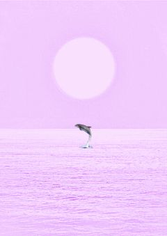 freetoedit candyminimal pink dolphin
