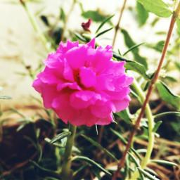 bloomingflower stark afternoonlight pretty closeupshot dpcnatureisee
