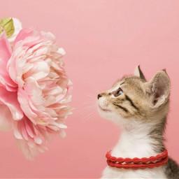 pink rose flower animal cat
