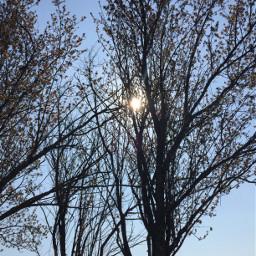 freetoedit myphotography nature trees sunlight