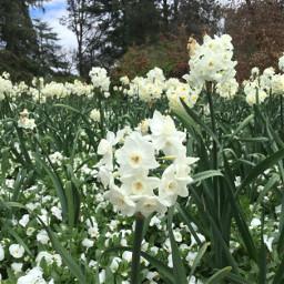 white flowers nature sky garden