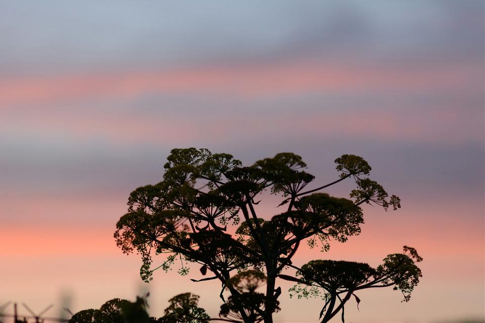 #sunset #photography