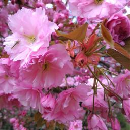 freetoedit flower spring springday springflowers