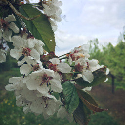 trees nature naturephotography green springtime