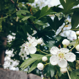 freetoedit photography nature blossom soring