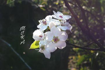 freetoedit photography myclick flower spring my