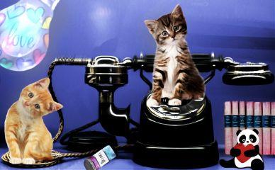 freetoedit catlover cute myedit myinspiration