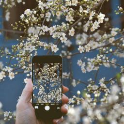 freetoedit phoneart bloom