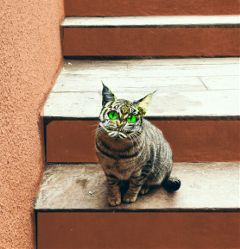 freetoedit catlover