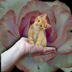freetoedit catlover flower cats