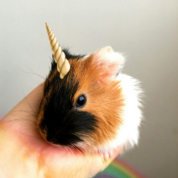 freetoedit unicorn horn rainbow