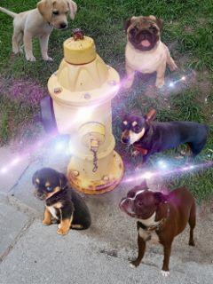 freetoedit pups gathering firehydrant