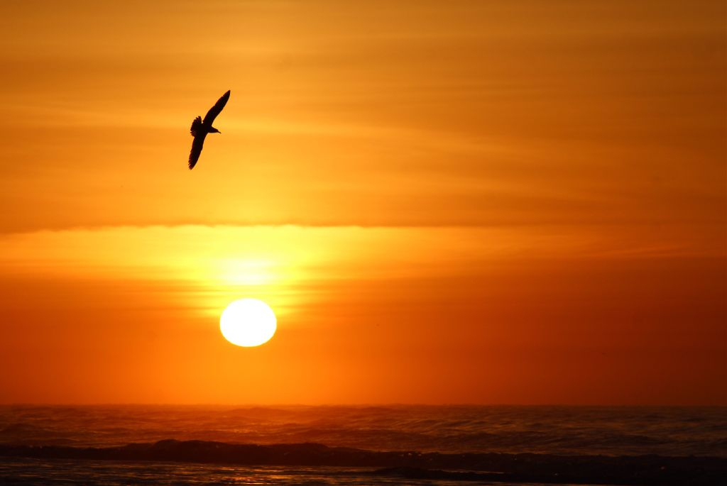 Image result for sunrise images and redbird