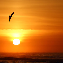 unedited sunrise silhouette red bird