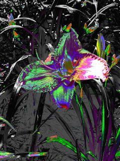 neoneffect flowerphotography