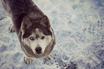 freetoedit dog