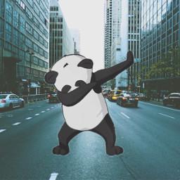 freetoedit dabbingpandaremix panda swag nyc