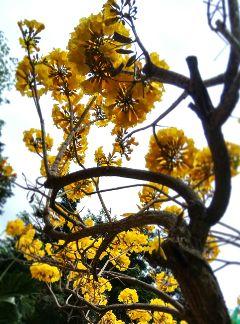 flowers springtime