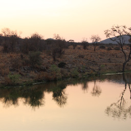 africa wateringhole