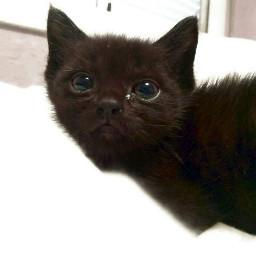 freetoedit family cat animal pet