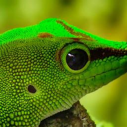 lizard petsandanimals photography green hdr