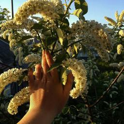 bokeh birthday emotions flower spring freetoedit