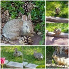 bunnies cute spring collage