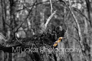 blackandwhite photography nature colorsplash nikond810