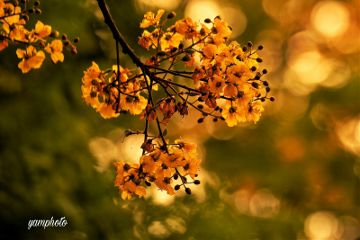 spring flowers photography