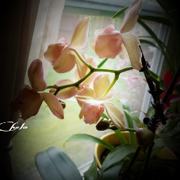 orchids flowers beauty indoorplant