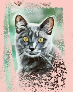 cat portrait artisticportrait petsandanimals