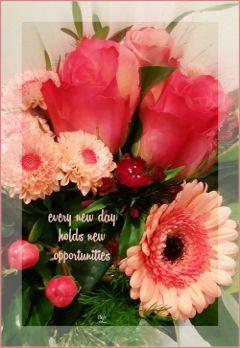 @csefi quotesandsayings card flowerarrangement red
