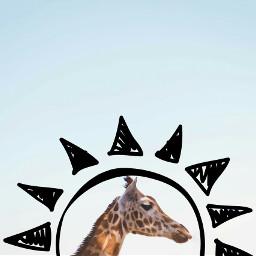 freetoedit ekc jirafe