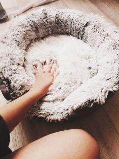freetoedit basket babydog lifestyle