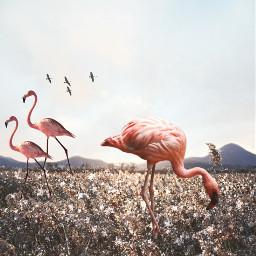 freetoedit myrmx glitter overlay flamingos