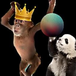 mycreation monkeysticker crownsticker bearsticker planetsticker freetoedit