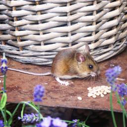 mygarden naturephotography mouse nature animals