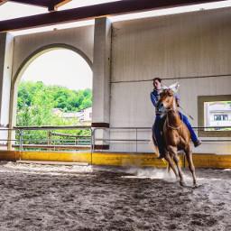 nature horse horselove