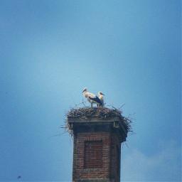 apeldoorn nature naturephotography ooievaar stork