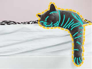 freetoedit chill cat outline stitch