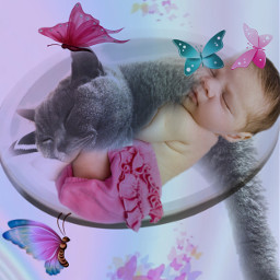 freetoedit myedit cat baby justchillin